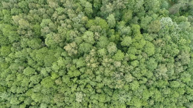 forest flygfoto - pine forest sweden bildbanksvideor och videomaterial från bakom kulisserna