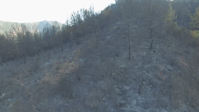 Forest After Fire video