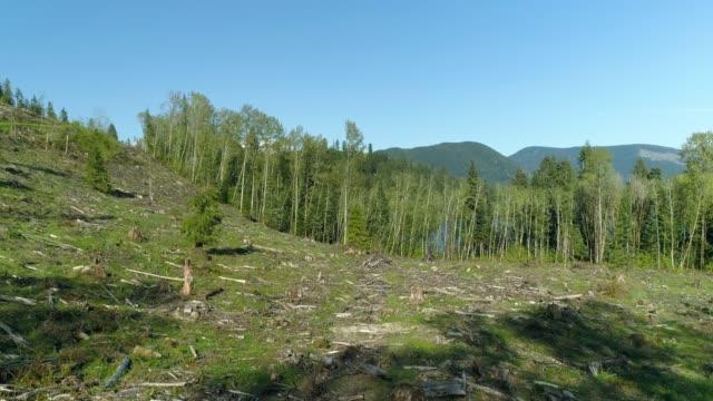 vidéos et rushes de forêt après que enregistrement clair coupe des arbres - destruction