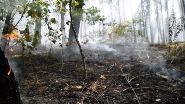 skogen efter branden. rök stiger från jorden efter en brand - skog brand bildbanksvideor och videomaterial från bakom kulisserna