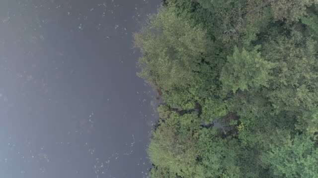 forest along the river, covered by strong morning fog. pennsylvania, usa. aerial drone video with the panning camera motion, looking down. - горы поконо стоковые видео и кадры b-roll