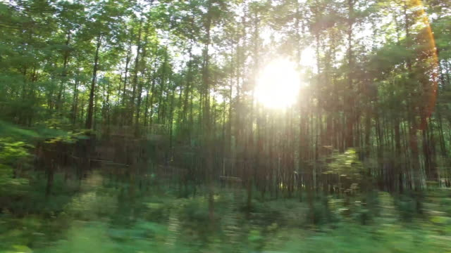 forest und bäume im auto fenster 4 k - seitenansicht stock-videos und b-roll-filmmaterial
