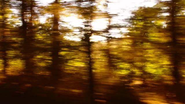 Forest and trees through the car window