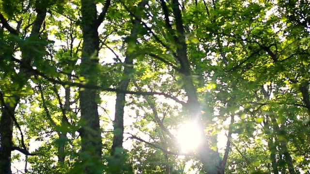 wald und bäume im auto fenster - vorbeigehen stock-videos und b-roll-filmmaterial