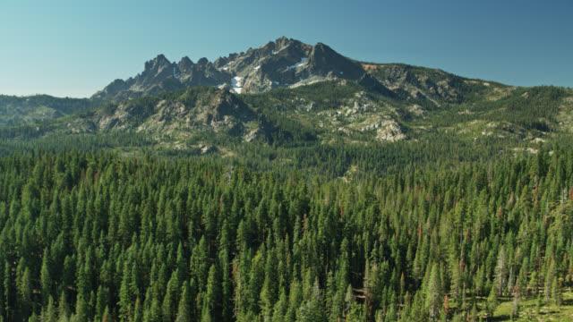 Forest Around Sierra Buttes - Drone Shot