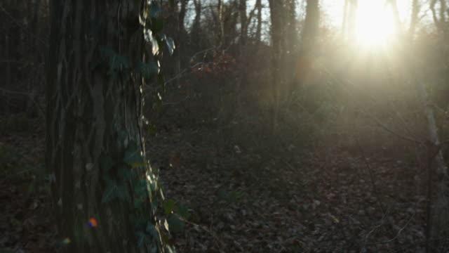 wald herbst sonnige steadyshot - laub winter stock-videos und b-roll-filmmaterial