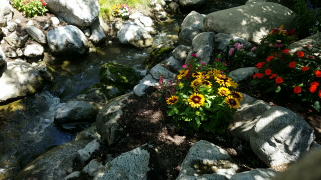 Forest brook and flowers video