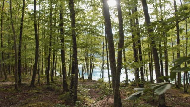 vídeos de stock e filmes b-roll de slo mo forest by the lake - margem do lago