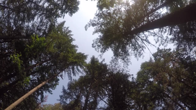Couvert forestier en levant - Vidéo