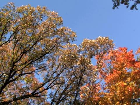 di alberi, panoramica - parte della pianta video stock e b–roll