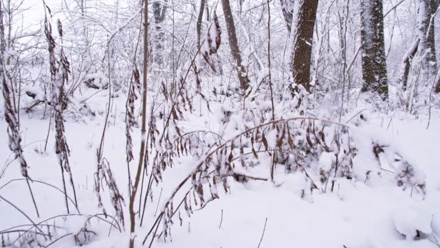 SLO MO Forest Covered With Snow video