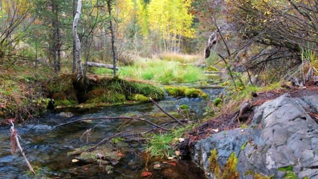 秋の雨の日にアルタイ山脈の森林クリーク ビデオ