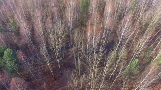 Forest during late autumn time. View from above. Poland. video