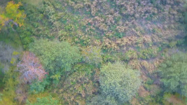 Forest edge from above video