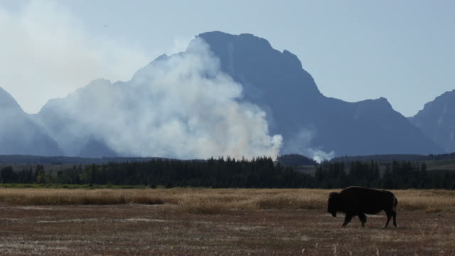 Forest fire and Bison in Grand Tetons NP Wyoming video