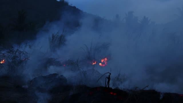 skogsbrand på natten. buskar brinner, luften är förorenad med rök. brand, närbild - skog brand bildbanksvideor och videomaterial från bakom kulisserna