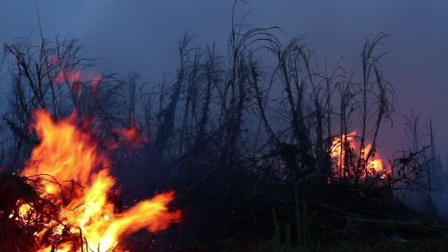 forest fire at night. bushes are burning, the air is polluted with smoke. fire, close-up - incendio video stock e b–roll