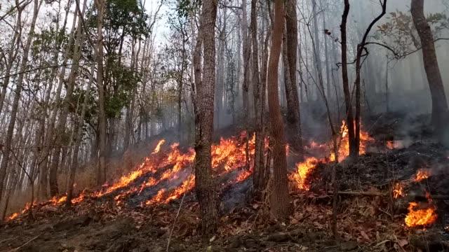 skogsbrand. brända träd efter wildfire, föroreningar och en massa rök - skog brand bildbanksvideor och videomaterial från bakom kulisserna