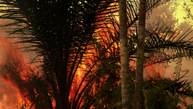 Forest fire burning in Sumatra, Indonesia. video