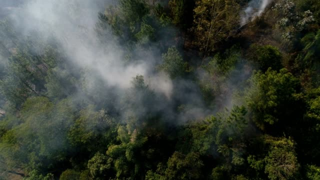 Forest Fire - Burning Tree Aerial video