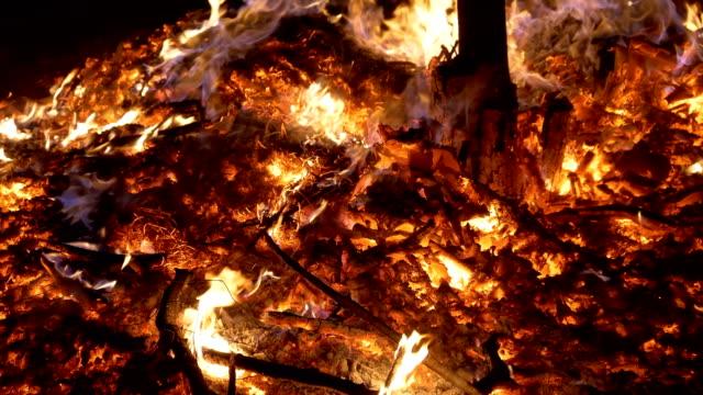 skogsbrand brinnande träd - skog brand bildbanksvideor och videomaterial från bakom kulisserna