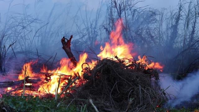 skogs brand buskar brinner, luften är förorenad med rök. brand, närbild - skog brand bildbanksvideor och videomaterial från bakom kulisserna