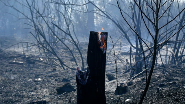 Forest fire. Flame destroys forest video