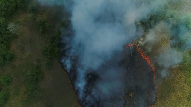 stockvideo's en b-roll-footage met bosbrand. gras brandt. luchtfoto drone schoot - bosbrand