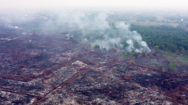 Forest fire in the island of Borneo Kalimantan in Indonesia Drone view and in 4k resolution of some forest fires caused by the criminal slash and burn technique in Indonesia. The video was taken in the surrounding of the city of Palangka Raya in central Kalimantan (Borneo) with heavy smokes affecting the health of people. rainforest stock videos & royalty-free footage