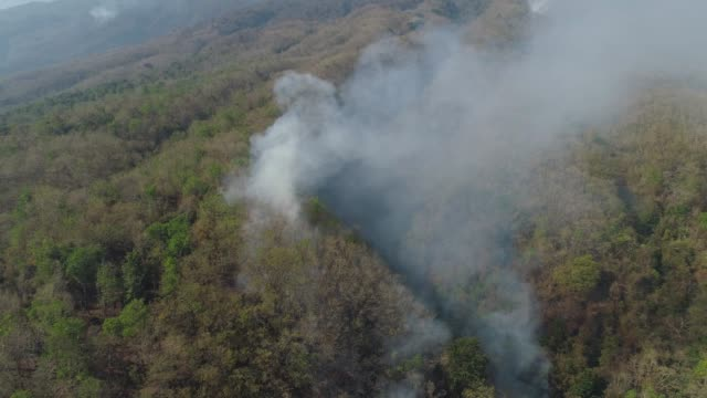 forest fire in the mountains video