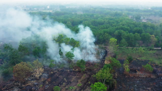 Forest fire on the island of Borneo Kalimantan in Indonesia