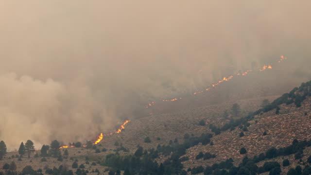 forest fire tidsfördröjning bränning - skog brand bildbanksvideor och videomaterial från bakom kulisserna