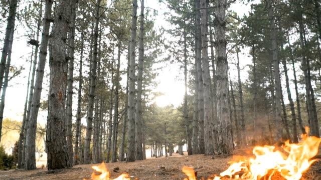 forest fire - incendio doloso video stock e b–roll