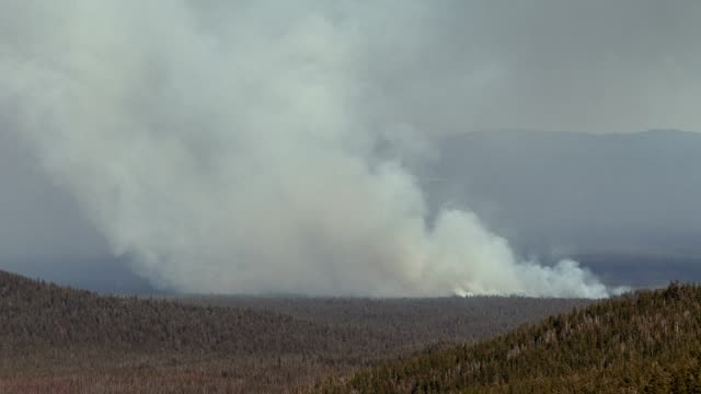 incendio boschivo - brent video stock e b–roll