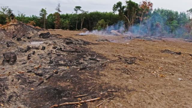 Waldbrände verbrennen Regenwaldabholzung, um Land zu räumen – Video