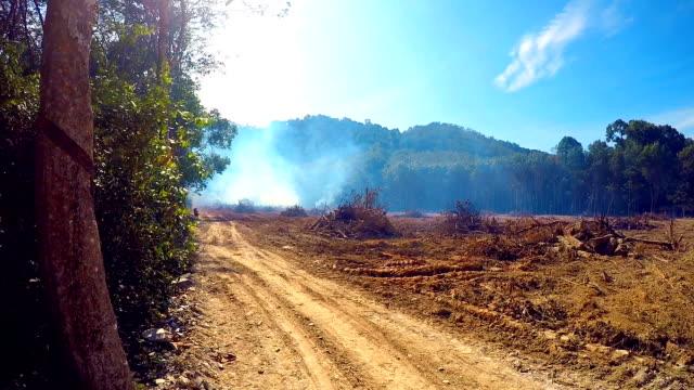 skogsbränder regnskogen avskogning smog - skog brand bildbanksvideor och videomaterial från bakom kulisserna
