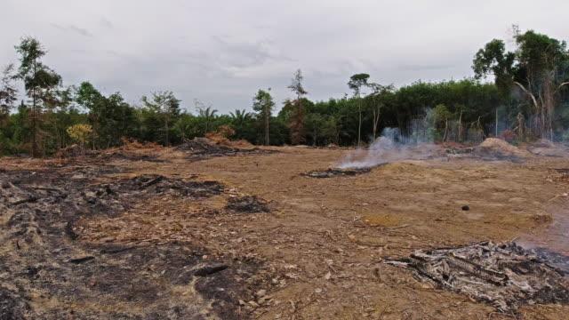 Waldbrände schneiden ab und verbrennen Abholzung von Landrodungen – Video