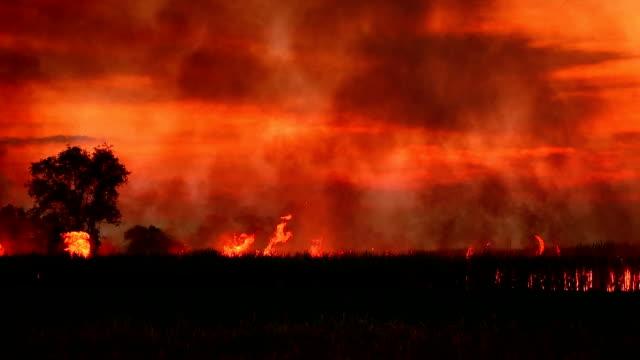 vidéos et rushes de feux de forêt - desastre natural