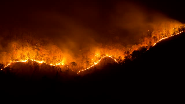 Forest fires. video