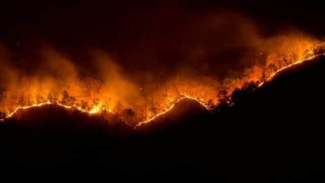 skogsbränder - skog brand bildbanksvideor och videomaterial från bakom kulisserna