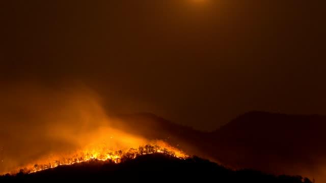 skogsbränder. - skog brand bildbanksvideor och videomaterial från bakom kulisserna