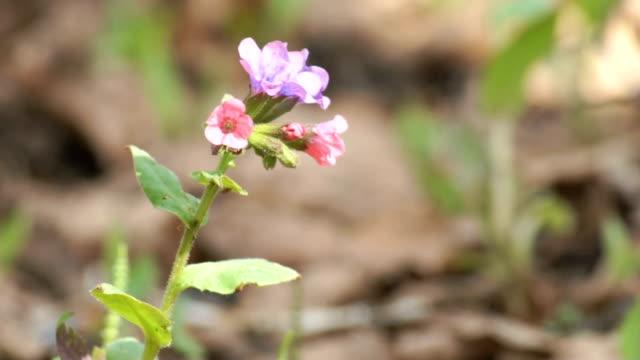 forest flower video