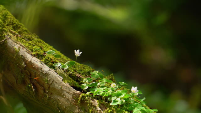 forest flowers - muschio flora video stock e b–roll