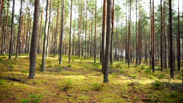 Forest go round shot. video