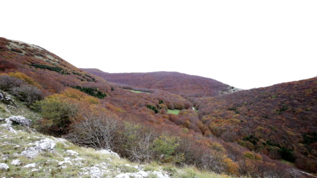 Forest in autumn on the Mount Cucco in Umbria in Italy. video