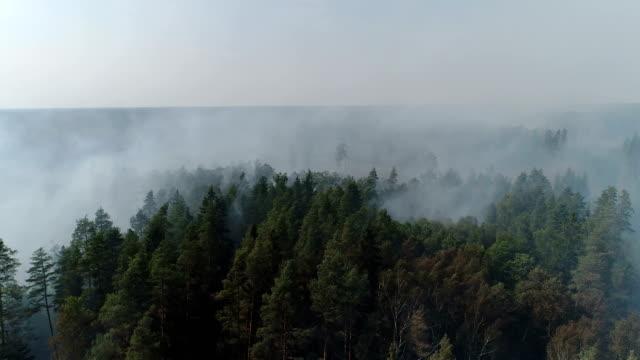 vídeos de stock e filmes b-roll de forest in fire, burning trees, bushs, burning dry grass in the peatbog. - letónia