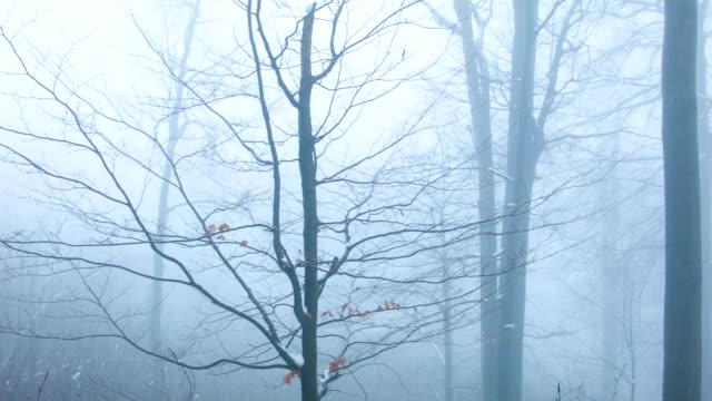 foresta nella nebbia - albero spoglio video stock e b–roll