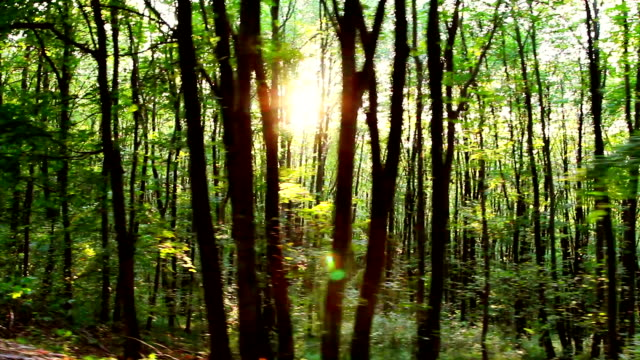 Forest in motion video