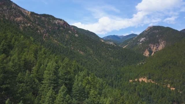 skog i rockies 01 - klippiga bergen bildbanksvideor och videomaterial från bakom kulisserna