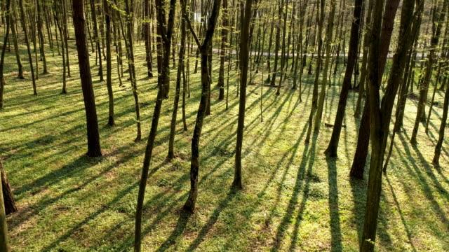 vídeos de stock e filmes b-roll de aerial forest in springtime - maio